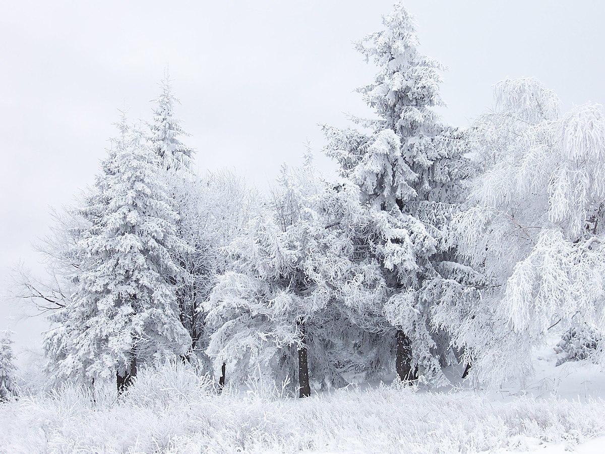 паустовский первый снег краткое содержание