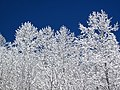 Snow from Winter Storm Skylar (12 March 2018) (near Frenchburg, Menifee County, Kentucky, USA) 13.jpg