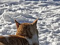 Snow from a Cat's Point of View (11385247343).jpg