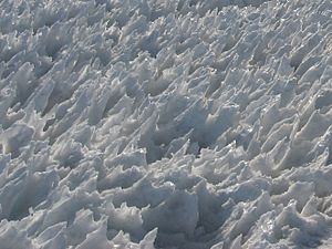Penitente (snow formation) - Image: Snow penitentes Mount Rainier