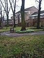 Snowdrops, Bishophill Community Garden - geograph.org.uk - 2259902.jpg