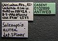 Solenopsis aurea casent0102899 label 1.jpg