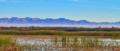 Sonny Bono Salton Sea National Wildlife Refuge - Waterfowl at Hazard Ponds.png