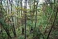 Speldhurst Wood - geograph.org.uk - 1545645.jpg
