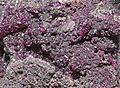 Sphaerocobaltite - spherocobaltite 1100.FS2015 1.jpg