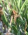 Spider (FG) (5663415573).jpg