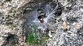 Spider in its web - 20140921 131713.jpg