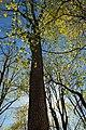 Spring Forest (1) (8688029598).jpg
