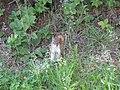 Squirrel, Point Pleasant Park (3110179869).jpg