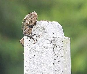 Sri Lanka heeft diverse reptielen soorten.jpg
