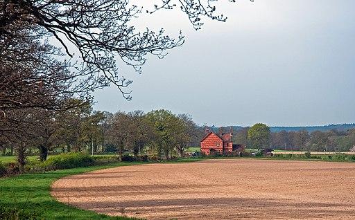St. Leonard's Forest, West Sussex, England, 11 April 2011 - Flickr - PhillipC (2)