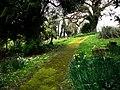St Mary's churchyard, Bepton - geograph.org.uk - 736317.jpg