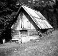 Stara prestaja na Vrsniku, lastnik Flajs Avgust, Soča 98, pri Jakcu 1952.jpg