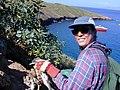 Starr-021108-0047-Nicotiana glauca-habitat with Kim and shearwater chick-Molokini-Maui (24257614370).jpg