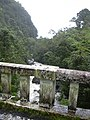 Starr-031210-0015-Spathodea campanulata-view bridge and rushing stream-Hana Hwy-Maui (24676962665).jpg