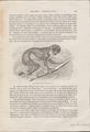 Stenops gracilis - 1700-1880 - Print - Iconographia Zoologica - Special Collections University of Amsterdam - UBA01 IZ19700177.tif