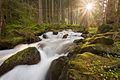 Stream of light, stream of water.jpg