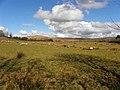 Stroanagibbagh Townland - geograph.org.uk - 1771444.jpg