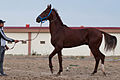 Studfarm in Turkmenistan - Flickr - Kerri-Jo (111).jpg