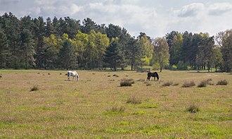Senne - Senner horses in the Moosheide nature reserve