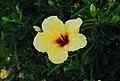 Sunburst in a flower.jpg