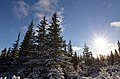 Sunrise in the winter Carpathians.jpg