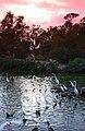 Sunset at the Audubon Zoo.jpg