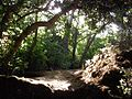Sunshine thru the trees on Nahal Amud - panoramio.jpg