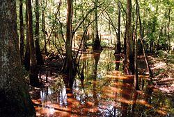 Swamp in Tickfaw State Park Louisiana.jpg