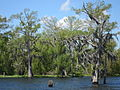 Swamp tour with Ernest Couret 2.jpg