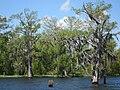 Swamp tour with Ernest Couret 2.jpg
