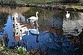 Swans at Telc (6) (25809088713).jpg