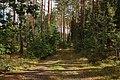 Tallskog ,Småland 01.jpg