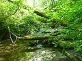 Taylor Creek.jpg