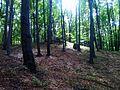 Tenczynek, Poland - panoramio (4).jpg