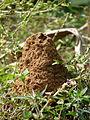 Termite mounds of Kadavoor.jpg