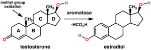 "Aromatase - General reaction for the conversion of testosterone to estradiol catalyzed by aromatase. Steroids are composed of four fused  rings (labeled A-D). Aromatase converts the ring labeled ""A"" into an aromatic state."
