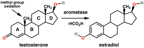 What Are Aromatase Inhibitors What Are Aromatase Inhibitors new pictures