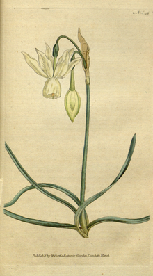 The Botanical Magazine, Plate 48 (Volume 2, 1788).png