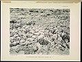 The Great Barrier Reef of Australia (PLATE XIX) (6898564646).jpg