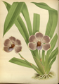 The Orchid Album-02-0030-0057.png