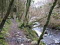 The lower waymarked path, Balloch Wood - geograph.org.uk - 313123.jpg