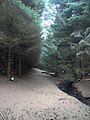 The path through Davygill Plantation - geograph.org.uk - 1214887.jpg