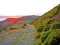 The setting sun lights the track ahead - geograph.org.uk - 836805.jpg