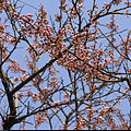 The spring in Moscow! (2406507549).jpg