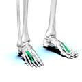 Third metatarsal bone02.png