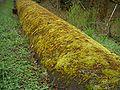 Tolt-Pipeline-3519.jpg