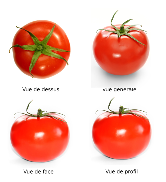 File:Tomato full.png