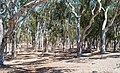 Torrey Pines, San Diego, CA, USA - panoramio (15).jpg