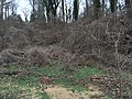 Towson, MD, USA - panoramio (5).jpg
